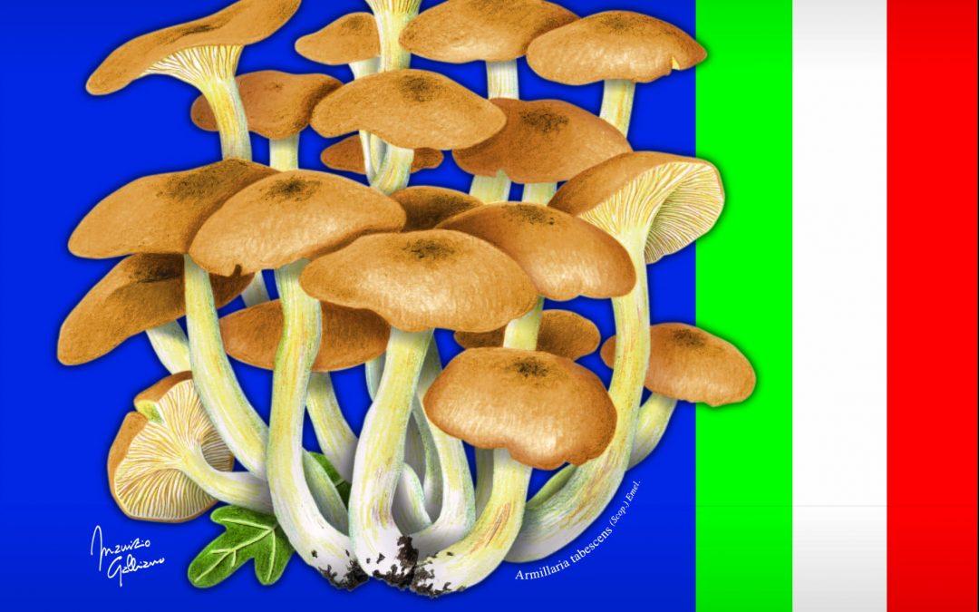 La 56ma Mostra del Fungo diventa nazionale.