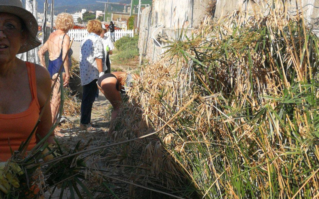 """Spiaggia libera. Abituali frequentatori si trasformano in volontari per pulirla, operando anche sulla passeggiatina """"dal sapor di  Liguria""""  che ve li conduce."""