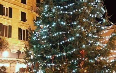 Savona ,è arrivato l'albero di Natale in Piazza Sisto