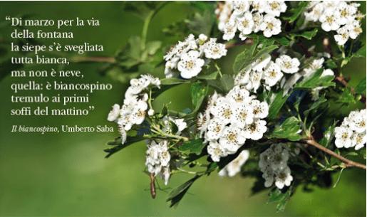 """""""Salute & Sapere"""" con la Dott.ssa Cinzia Peri medico di famiglia."""
